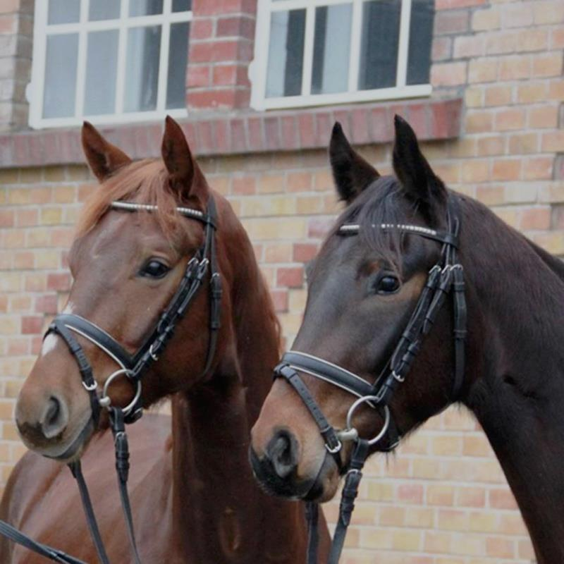 German Horses for Sale